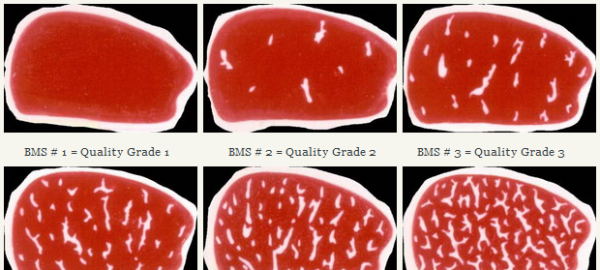 Оценка качества мраморного мяса по японской шкале