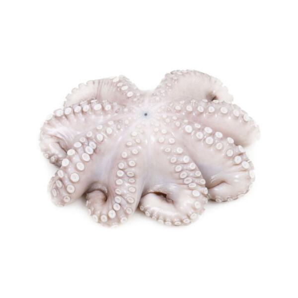 Осьминог Octopus