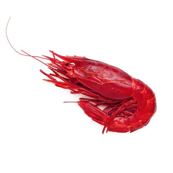 Карабинеро Scarlet prawns
