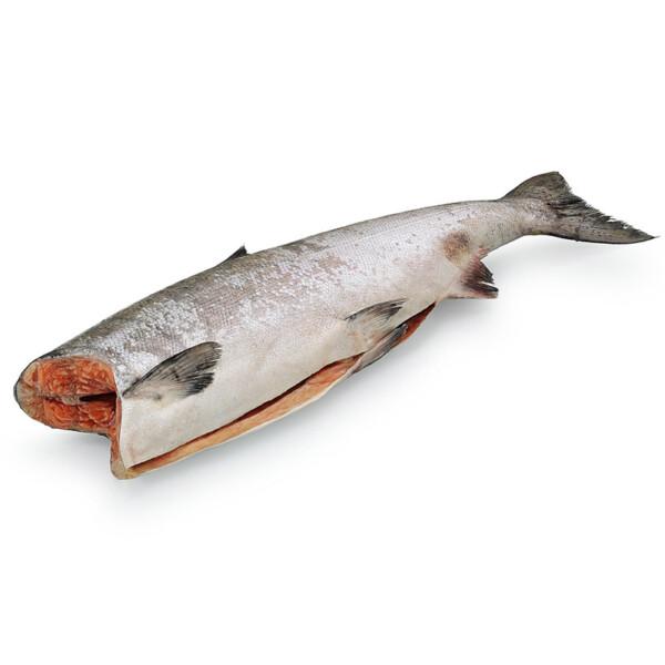 Королевский лосось Чавича